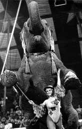 Elephant rider, Clyde Beatty-Cole Bros. Circus